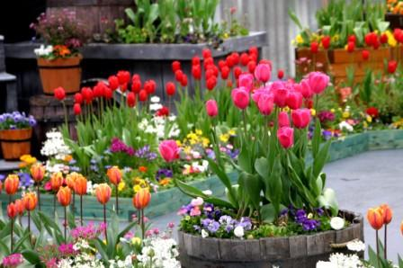 rasied-bed-gardening-1